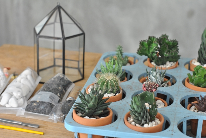 TERRARIUM DAY WITH VAXA & BUCAPE